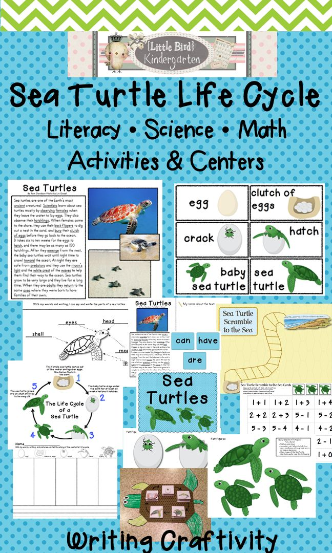 Sea Turtle Life Cycle Literacy, Science & Math Activites and Centers (including informational close reading of text activities and write around the room center)