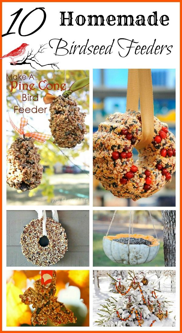 Here are 10  ideas for homemade birdseed feeders that are probably messy but fun for the whole family to make! #Birdfeeding