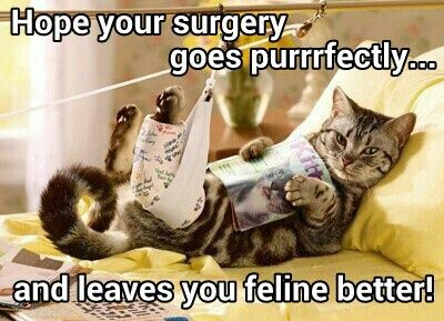 c000b9e2601a4d8ddb087b857d4cf957 get well cards funny animals 52 best get well soon images on pinterest get well, get well cards