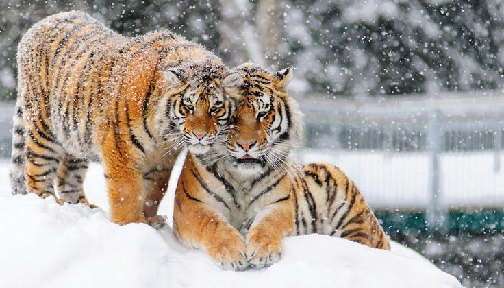 Brothers in the snow