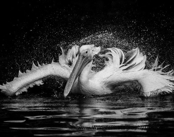 Black and white nature photography wildlife photography tips