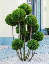 Pflanzungen vom Pflänzchen bis zum Baum