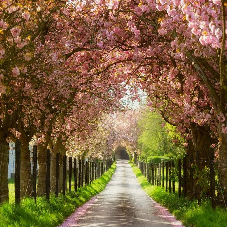 Blossom Lane by Lars van de Goor on 500px