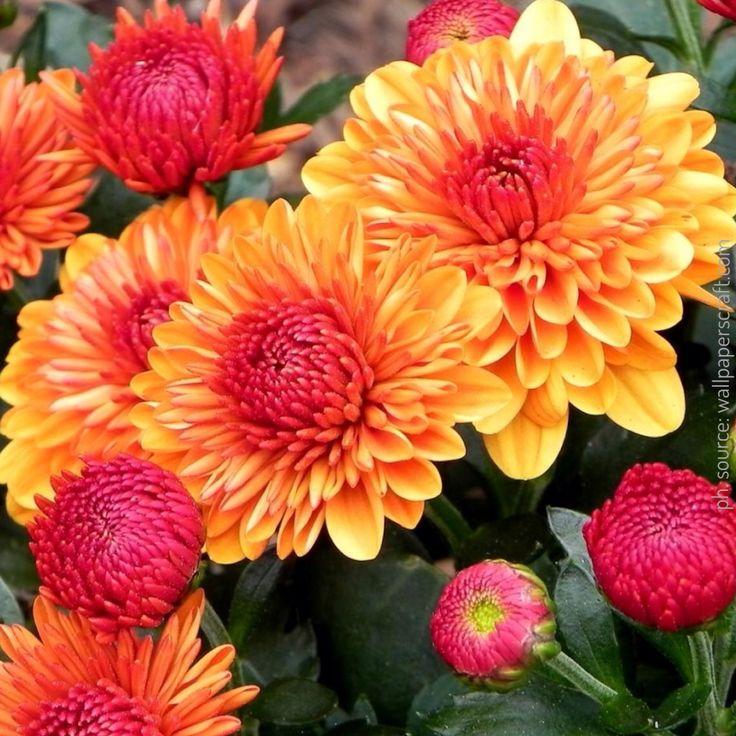 Happy Mother's Day  #missyou #yourfavoriteflowers #dahlia #dahlias #mothersday #mom #momsday #style #beautifulwomen #mamma #festadellamamma #Gabriella #Ruggieri
