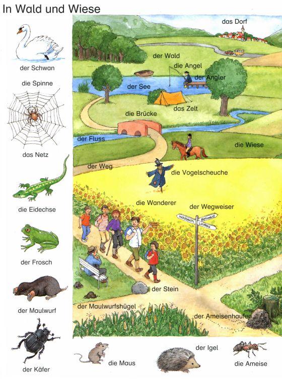 Deutsch lernen: In Wald und Wiese