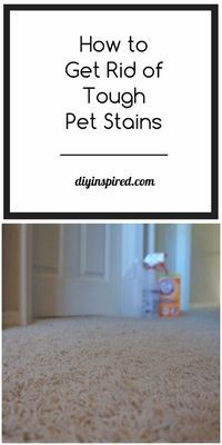 How to Remove Tough Pet Stains