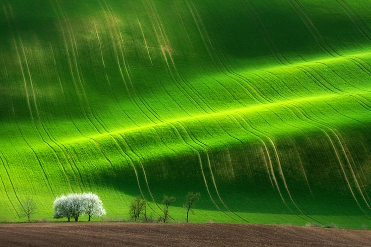 The sping tree by Marcin Sobas, via 500px
