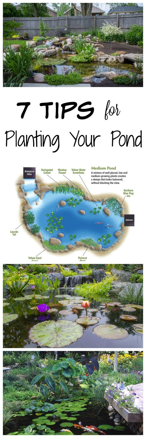 Best 25 fish ponds ideas on pinterest pond kits koi for Pond fishing tips