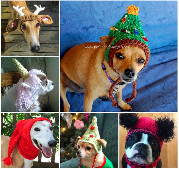 Crochet and Knitted Dog Hats FREE Patterns!