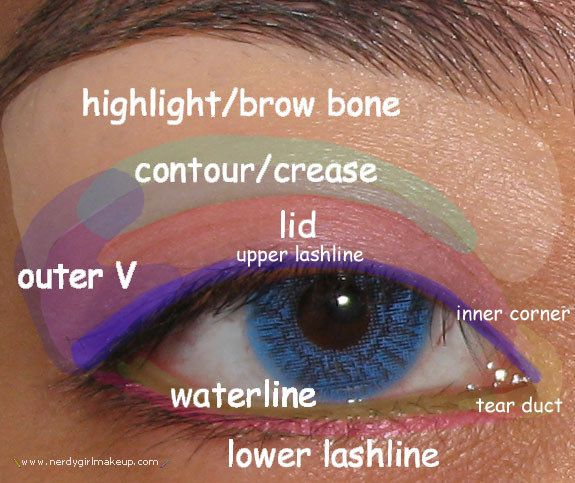 Learn the lingo so you know which part of your eye is what. | 19 Eyeshadow Basics Everyone Should Know