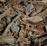 Wood chips are a long lasting organic mulch for trees, shrubs, and perennials which in many cases can be had for free