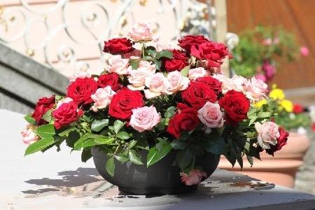 Rosen schön angerichtet