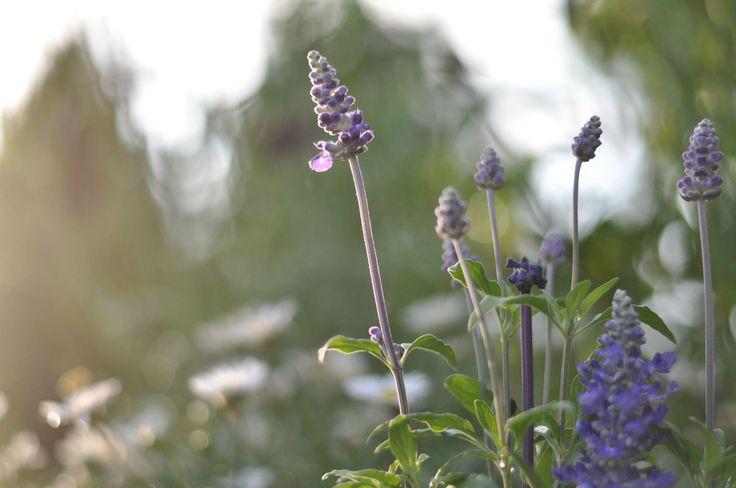 herbals in my garden