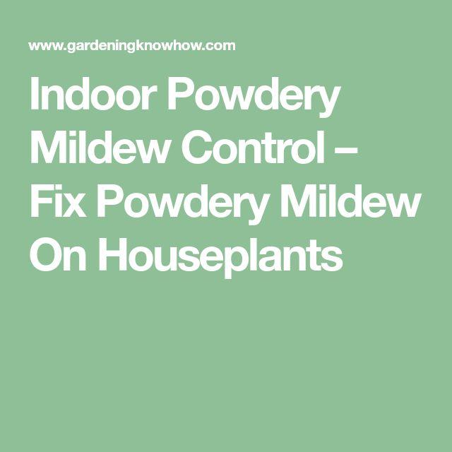 Indoor Powdery Mildew Control – Fix Powdery Mildew On Houseplants