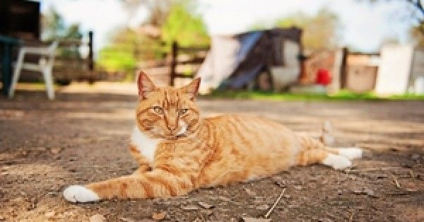 Santa Fe Shelter Offers 'Barn Cats' For Adoption | The Animal Rescue Site Blog