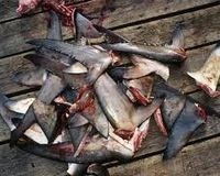 Stop the Sale of Sharks Fins and Sharks Fin Soup in the UK http://www.thepetitionsite.com/801/439/750/stop-the-sale-of-sharks-fins-and-sharks-fin-soup-in-the-uk/ @Sea Shepherd Conservation Society #defendconserveprotect