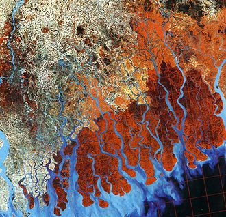 Landsat color composite of the mouths of the Ganges River distributaries in Pakistan; deep red areas are mangrove swamps; deltaic deposits...