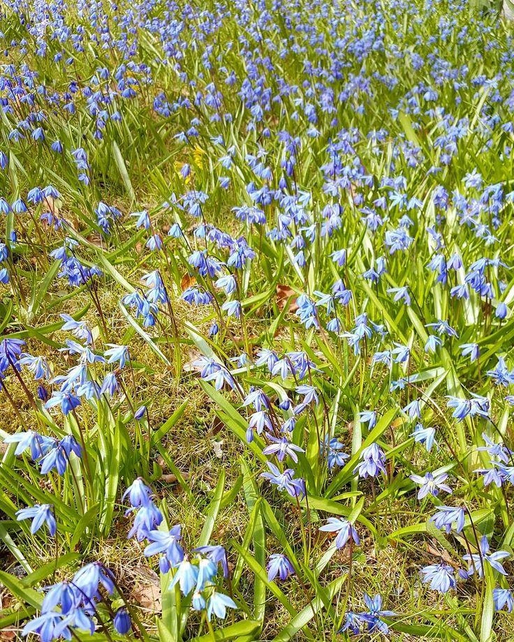 Springmood  #kevät #spring #newbeginnings #uudetalut #seasonsoffinland #thisisfinland #suomi #finland #ig_finland #flowerpower #flowerstagram #flowers #flora #luonto #nature #ignature #ig_nature #naturphotos #turku #åbo #visitturku #kissmyturku #seasonsofturku #springmood #lifestyleblogger #nelkytplusblogit #åblogit
