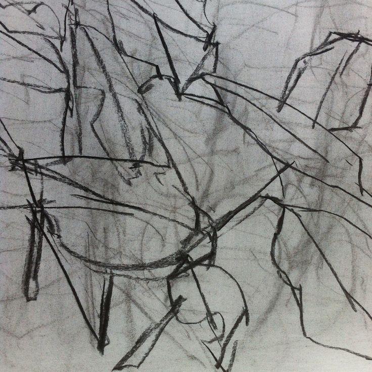 Alpinia caerula, Lynn Cook, May 2015, charcoal on paper