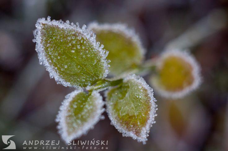 Leaves in 'sugar' cover ;)