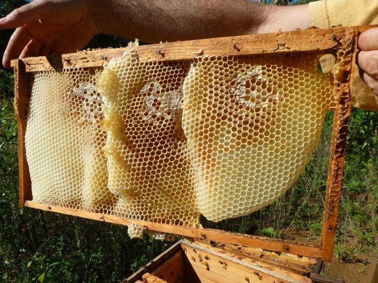 1000 id es sur le th me essaim sur pinterest apiculteur - Essaim de guepe ...