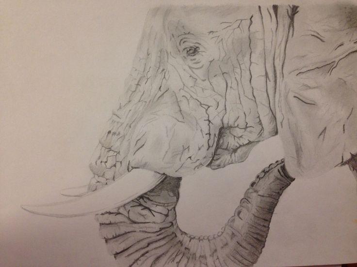 Elephant drawing took sooo long!