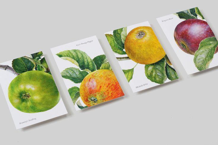 Business card design with botanical illustrative detail by NB Studio for British cyder maker Aspall.
