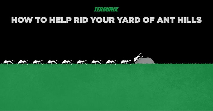 Small ants build pretty massive hills. Get on top of any ant hill problem with these tips to help clear them out for good.
