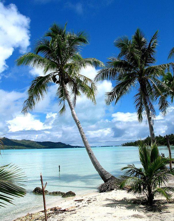 L'eau tellement transparente qu'elle est presque blanche, #borabora #palmiers #voyagesdereves