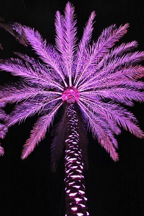 palm trees and purple :)