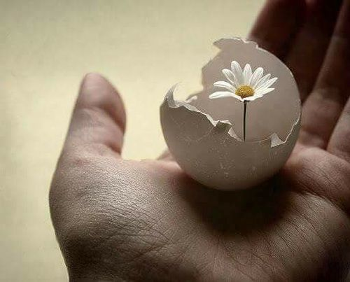 Image about flowers in hands by ∫ ˆ◡ˆ. Ângela. ˆ◡ˆ ∫