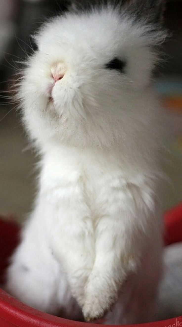 best 25 wild baby rabbits ideas on pinterest nature animals