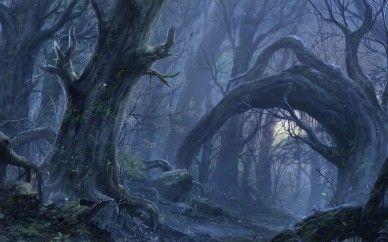 光が届かない暗い森の中の風景の壁紙