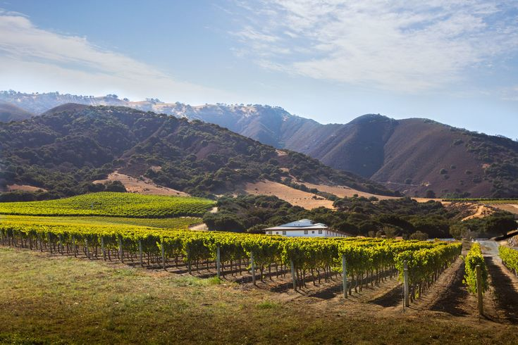 California's Overlooked Treasure: Santa Lucia Highlands