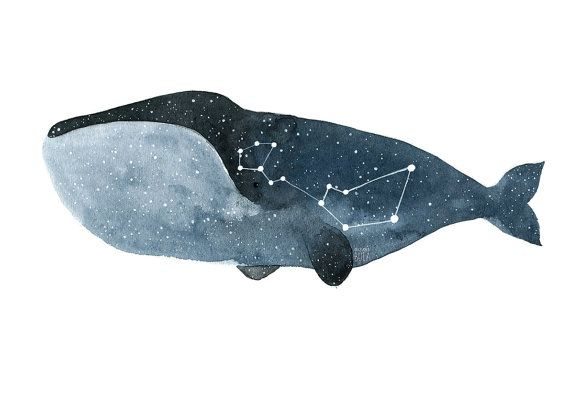Whale art impression aquarelle whale baleine par TukoniTribe