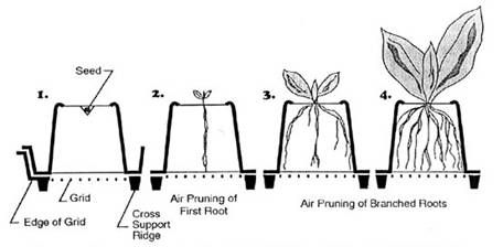 Air Pruning of plant roots for stronger thicker plant and roots.