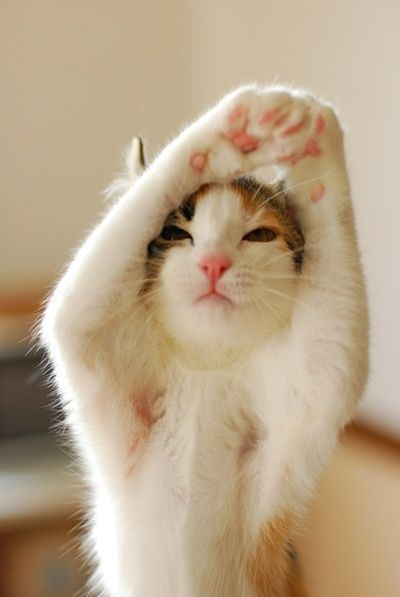 Morning stretches.