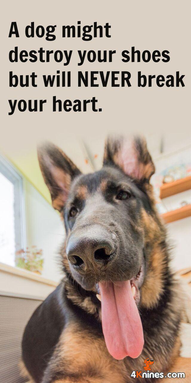 German Shepherd Strong And Loyal German Shepherd Quotes Dogs German Shepherd Dogs