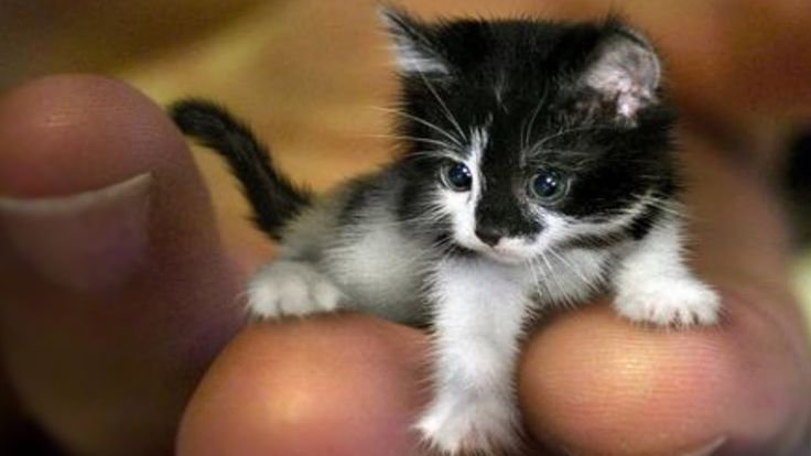 World S Smallest Cats Cat Breeds