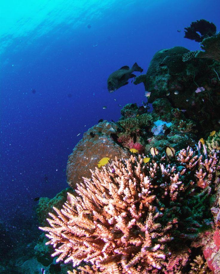 #オーストラリア#ケアンズ#クイーンズランド州#グレートバリアリーフ#珊瑚#海#青#アウターリーフ#シュノーケリング#スキンダイビング#ダイビング#イソギンチャク#australia#cairns#queensland#greatbarrierreef#ocean#sea#blue#underthesea#coral#outerreef#snorkeling#skindiving#diving by underthesea_24 http://ift.tt/1UokkV2