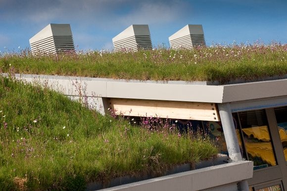 Wildflower meadow roof planting. The turf is easy to install and to maintain http://www.wildflowerturf.co.uk/