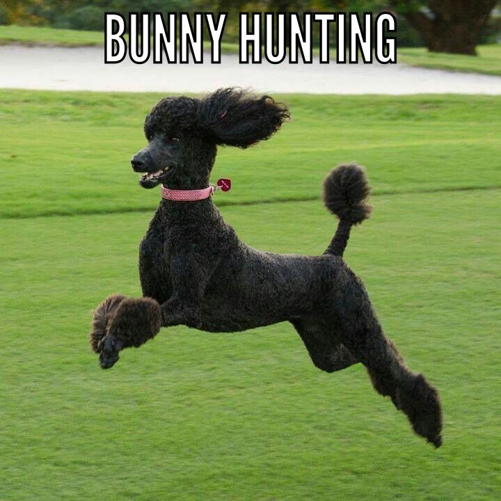 Bunny hunting! #pipsyrenee