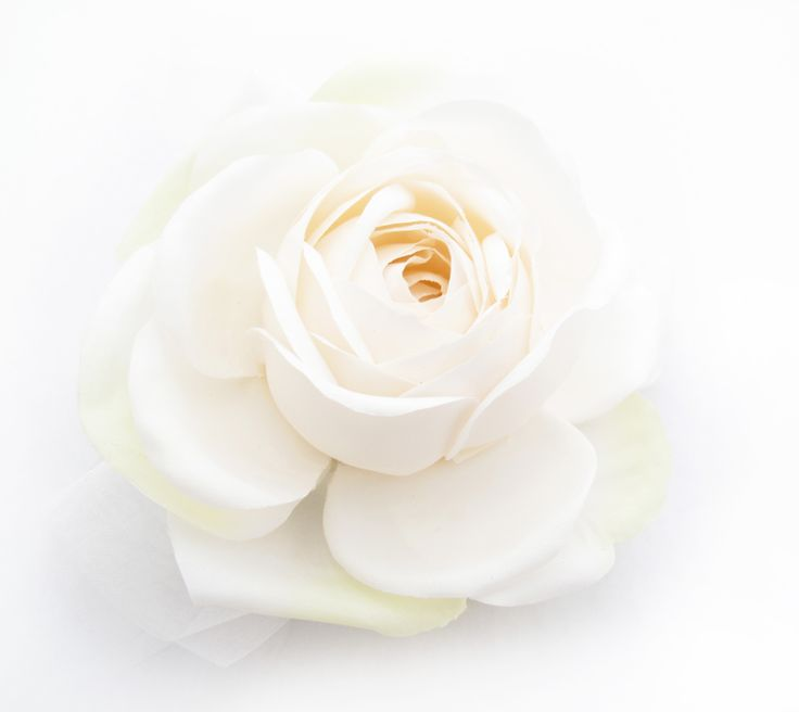 A feature rose makes a beautiful hair flower. Find your perfect wedding flowers at www.loveflowers.com.au