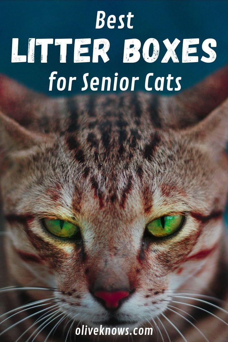 Best Cat Food For Senior Cats Wet And Dry Food Katzen Futter Gutes Katzenfutter Katzenhaltungstipps
