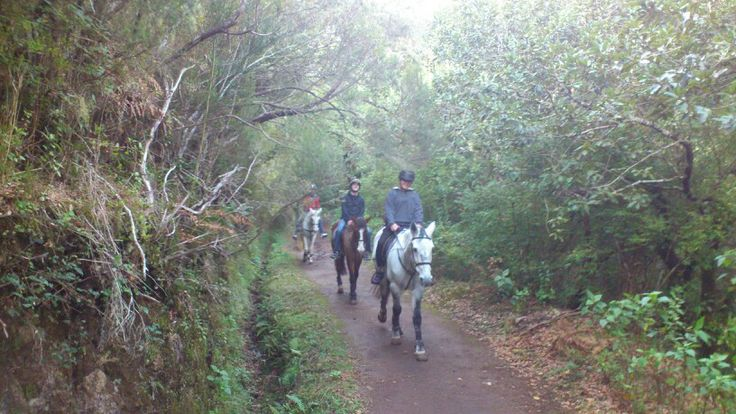 Enjoying a ride along the #levada #madeira #horseriding #équitation #reiten