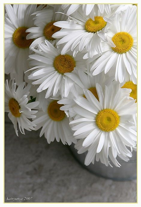 daisies...white adds a sparkle to a pink and blue color scheme, can find varieties that will bloom all summer and fall