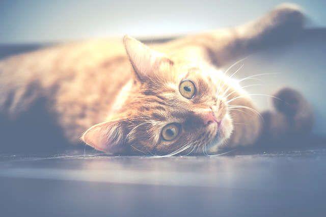 Odeur de pipi de chat