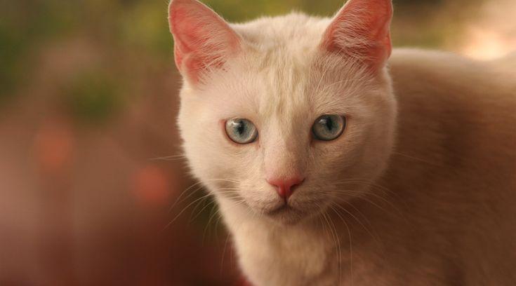 La pipì di gatto ha un odore molto intenso e fastidioso e va pulita in fretta per evitare che si assorba nei tessuti o nel pavimento. Scopri come fare
