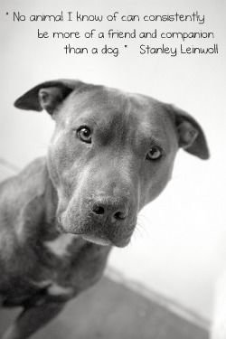Pretty Awesome: Dogs Quotes, Best Friends, Pit Bull Dogs, Pet, Pitbull, So True, Baby Dogs, Dogs Friends Quotes, Animal