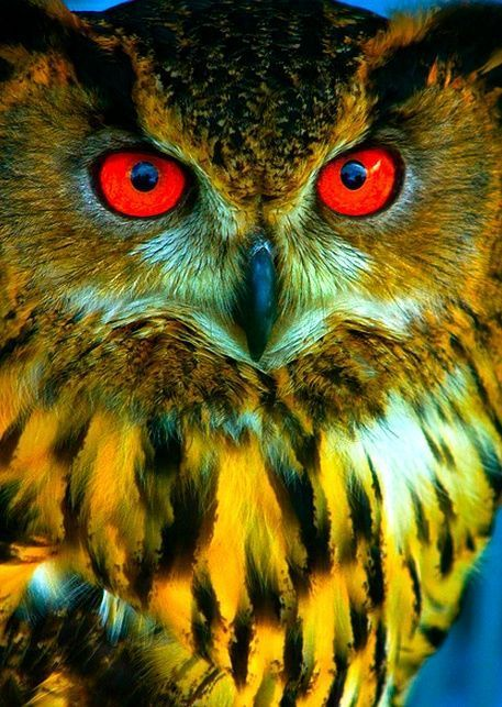 OWLS ARE INCREDIBLE
